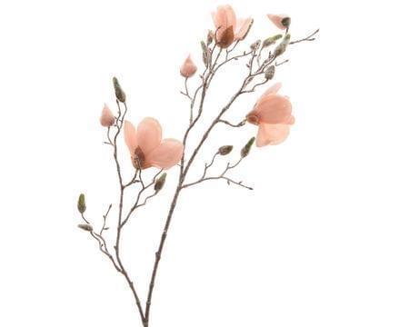 Decoris Magnoliatak