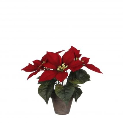 Mica Poinsettia rood in pot stan grijs d
