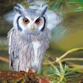 Duni Servetten Winter Owl